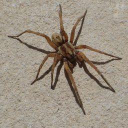 Уничтожение пауков в Иркутске
